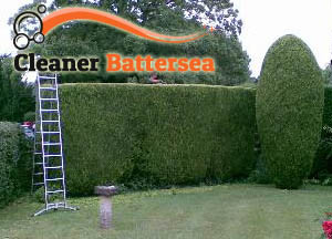 Hedge Maintenance Battersea